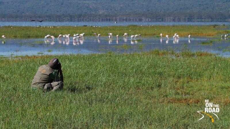 The flamingos grab all the photographer's attention at Lake Nakuru