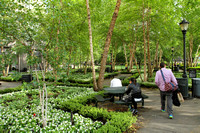 One of the many green spaces in New York