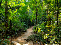The jungle trail leading to Meenmutty Falls inside Peppara Wildlife Sanctuary