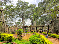 Dodda Alada Mara - a popular weekend picnic spot for Bangaloreans