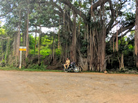 A cop doing his duty under the shade of a Banyan tree at Shivanasamudra, Karnataka