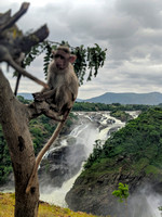The waterfall and the macaque