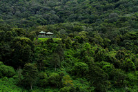 The stunning forest bungalows of Pampadum Shola National Park that is located right in the middle of Shola Forests