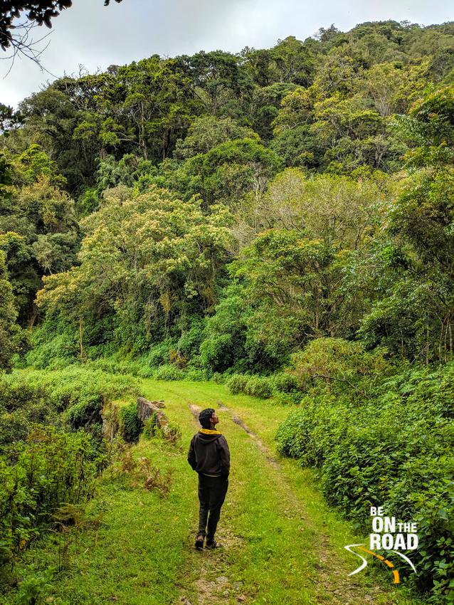 Can't stop admiring the lush nature inside Pampadum Shola National Park, Kerala