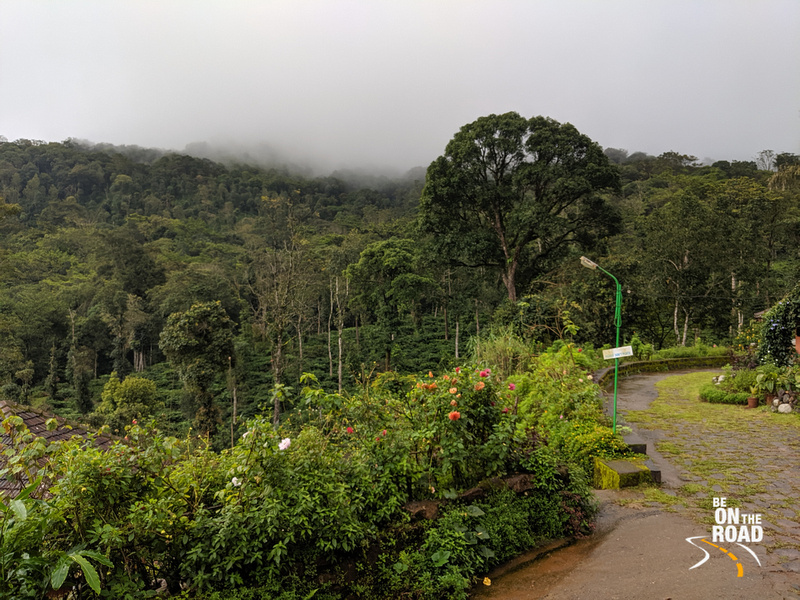 The pristine environment at Honey valley estate in Coorg