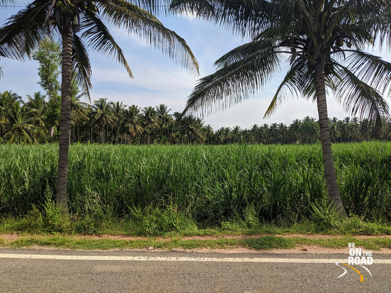 The sugarcane route to Melukote, Karnataka