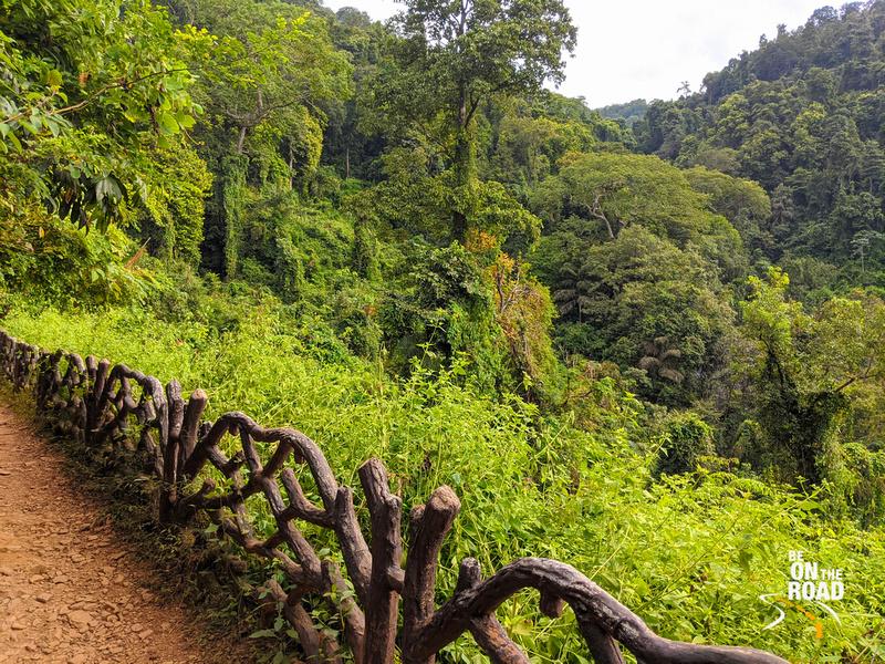 The dense trail that leads to Vibhooti Falls