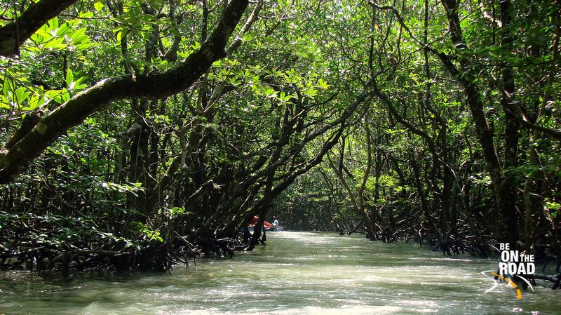 Way into Mangrove Swamp and to goto Limestone Caves, Baratang Island