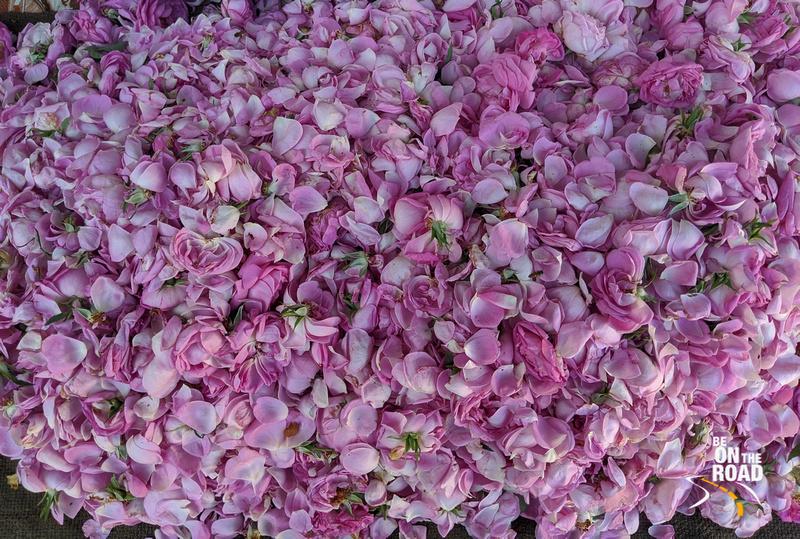 Rose petals just outside Dargah of Sheikh Zainuddin, Khuldabad