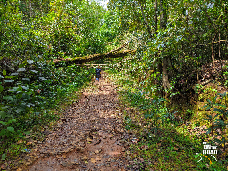 Trail leading to Unchalli Falls, Karnataka