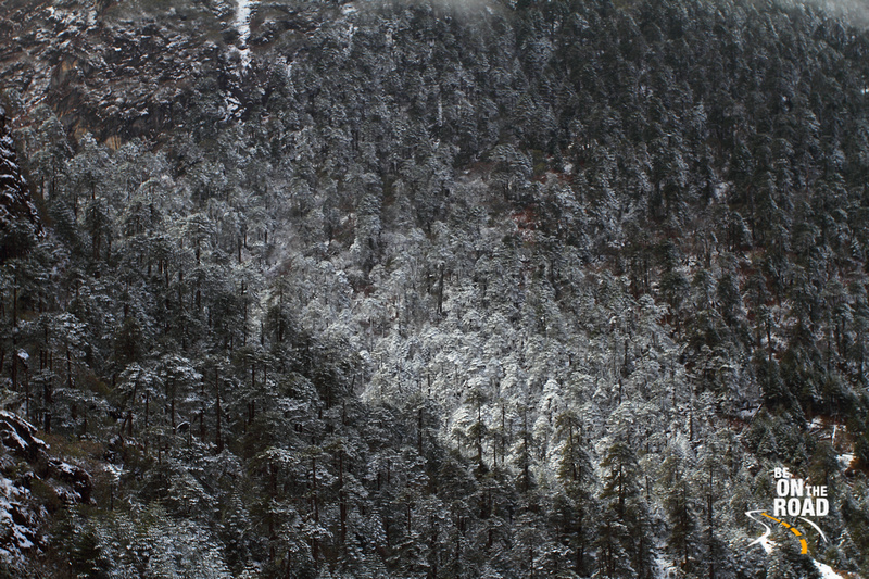 Fresh snowfall at Sela pass, Arunachal Pradesh
