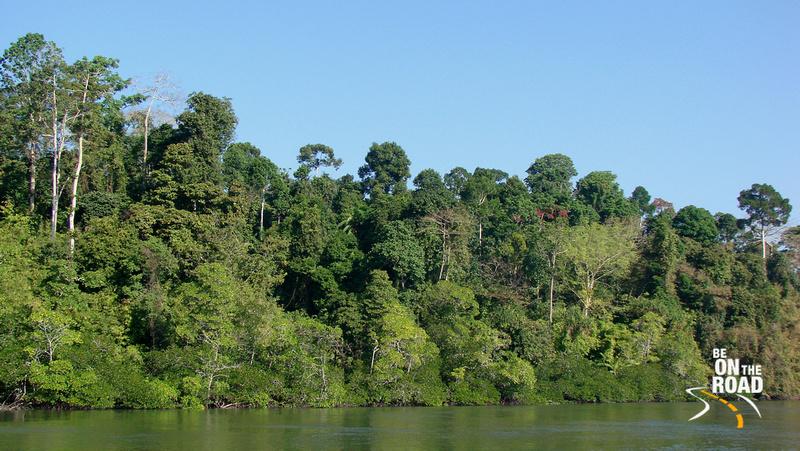 Mangroves and Tropical Rainforests of Baratang Island