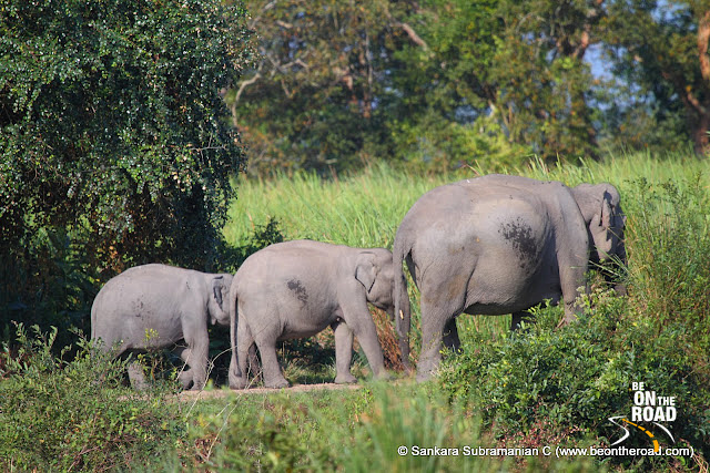 Three Generations of Pachyderms