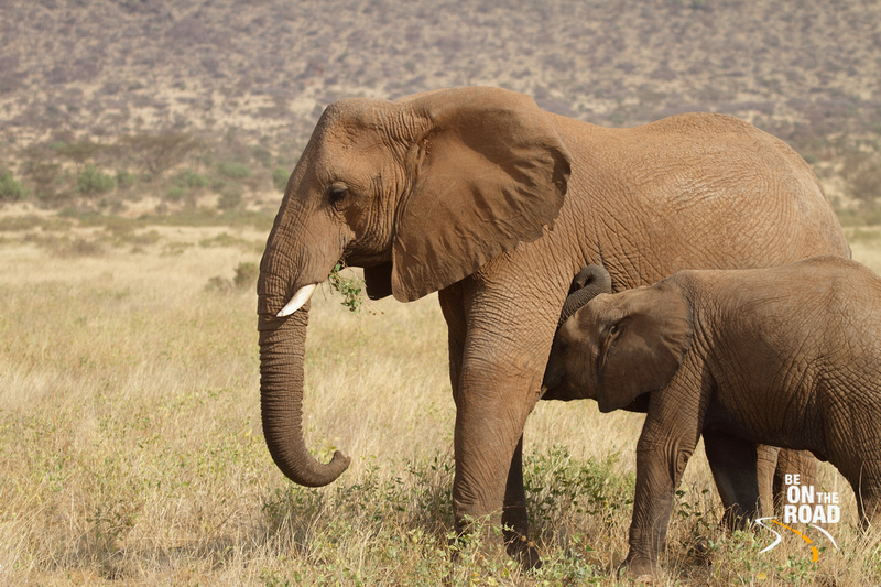 A mother and baby elephant at Samburu