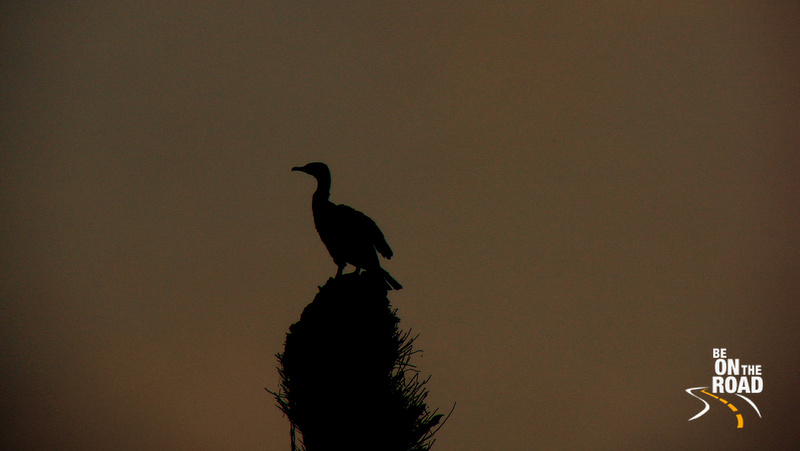 Cormorant at Dr Salim Ali bird sanctuary, Goa