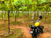 Motorcycle Trip to the vineyards of rural Chikkaballapur