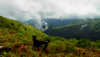 Monsoon Trek to Thadiyendamol Peak, Coorg, Karnataka, India
