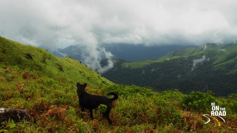 What a view! Even the mutt stares on! - Kodagu, Karnataka