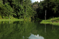 The super dense and green Royal Belum Rainforests of Malaysia