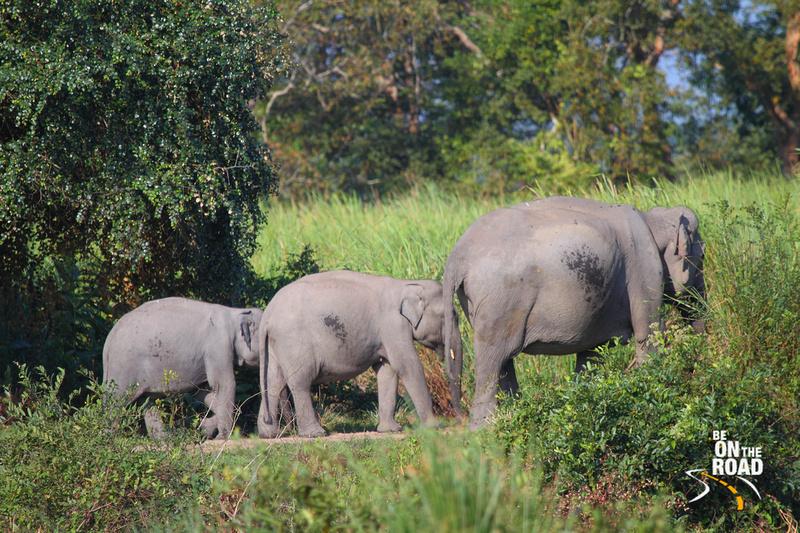 3 generations of pachyderms strut their stuff at Kaziranga National Park, Assam