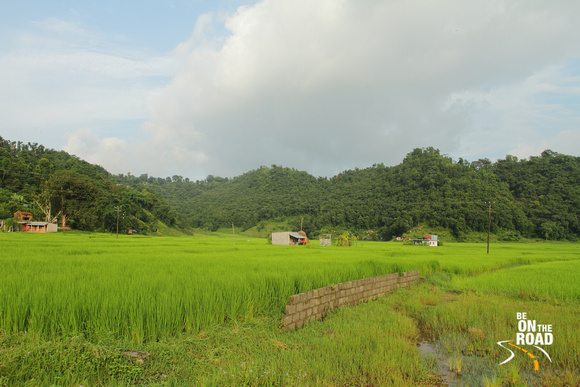 Lush green paddy fields at Pokhara countryside