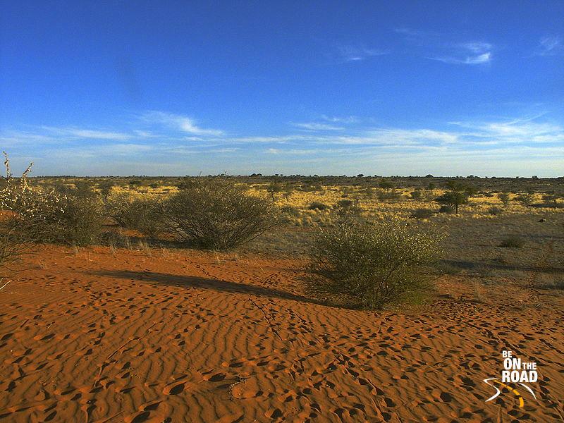 File:Kalahari PICT0036 .JPG
