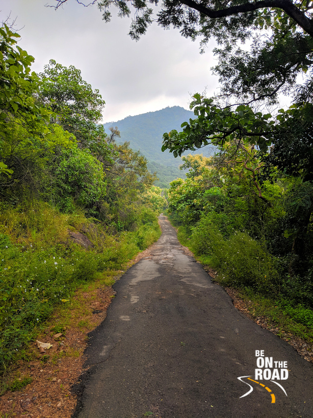 Scenic forest road leading to Manimuthar Falls and Manjolai Tea Estate, Tamil Nadu