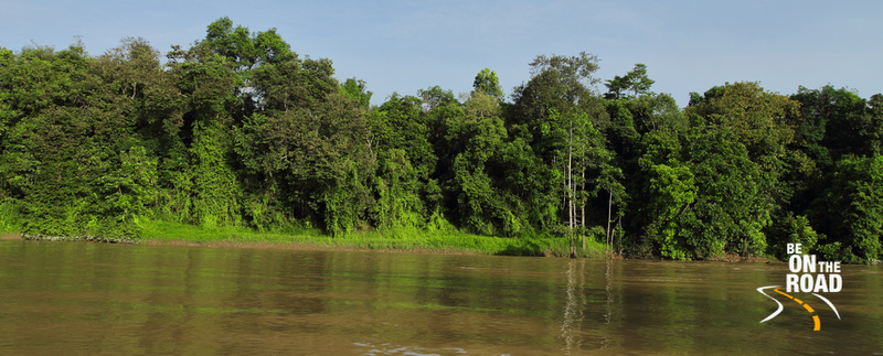 Lush rainforests by the Kinabatangan river, Borneo, Malaysia