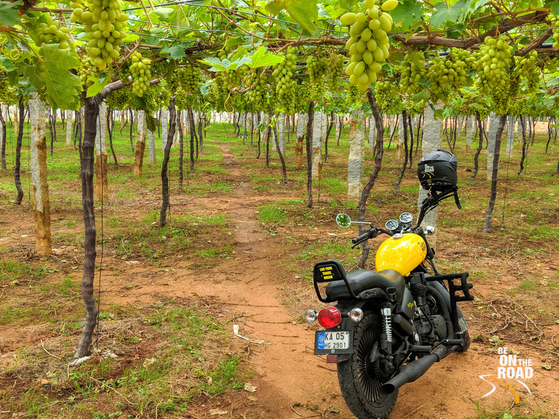 Rural Chikkaballapur and its vineyards offers a fabulous day trip from Bangalore
