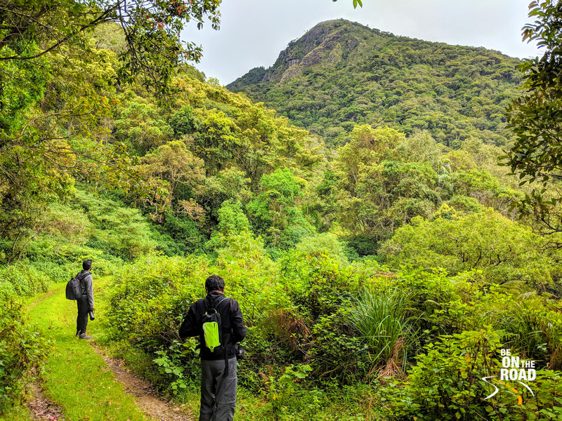 Admiring the gorgeous green colors of Pampadum Shola National Park, Kerala