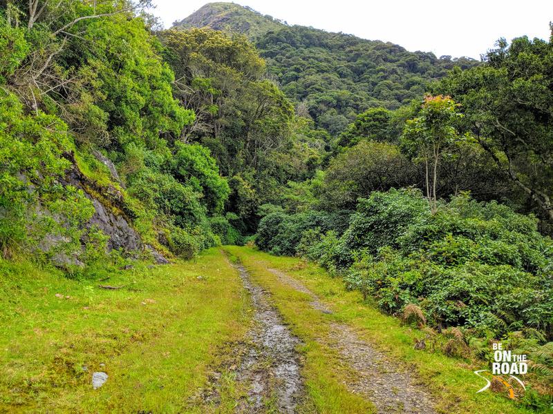 The ancient road connecting Munnar and Kodaikanal