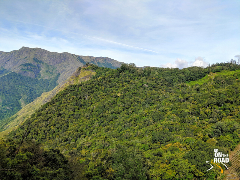 The Neelakurinji mountain surrounded by lush green shola forests