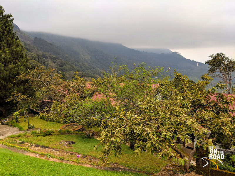 Gorgeous nature seen from Windermere Estate, Munnar