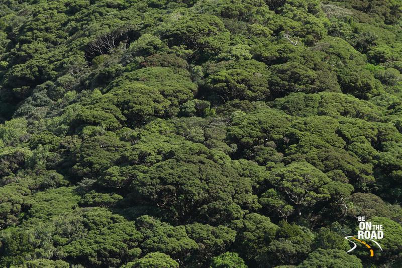 Cauliflower Shola Forests inside Mukurthi National Park, Tamil Nadu