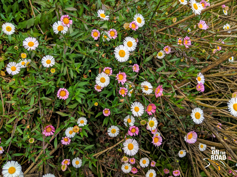 Valley of flowers like effect seen at Mukurthi National Park, Tamil Nadu