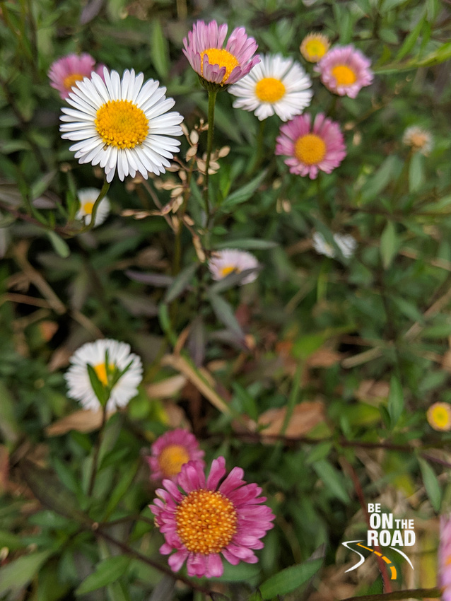 Wild flowers blooming inside Mukurthi National Park