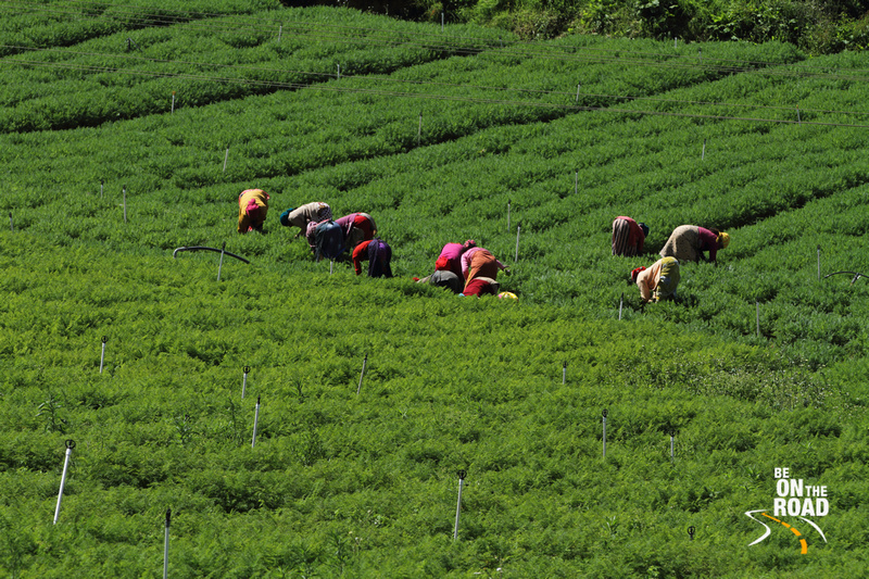 Women working in the vegetable farms surrounding Emerald Lake