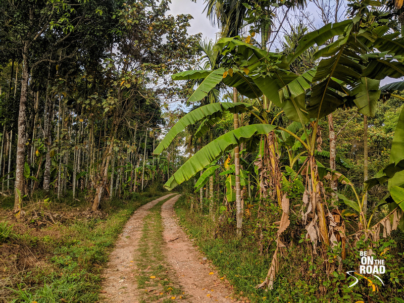A plantation jeep track - Wayanad, Kerala