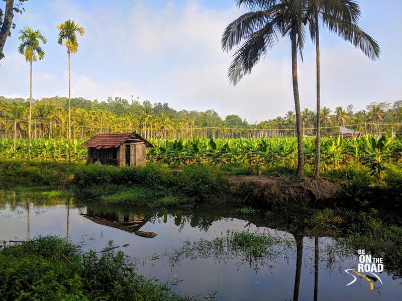 Banana Plantations of Aham Anubhava, Wayanad, Kerala
