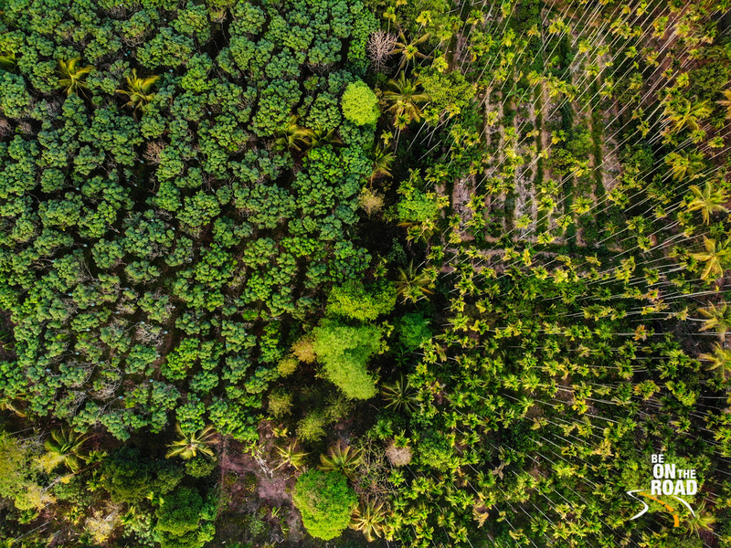 Drone shot of Mylambady, Wayanad - forests, plantations and farms