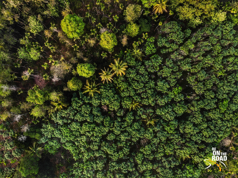 Green jungles and plantations of Wayanad from the sky