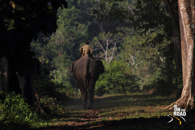 India's famous elephant safari