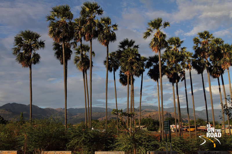 First rays of the sun on the palm trees with the Manimuthar hills in the background