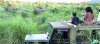 A large herd of elephants sighted during a jeep safari at Minneriya National Park, Srilanka