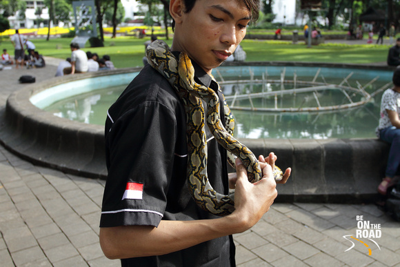 Python as a pet in Jakarta, Indonesia