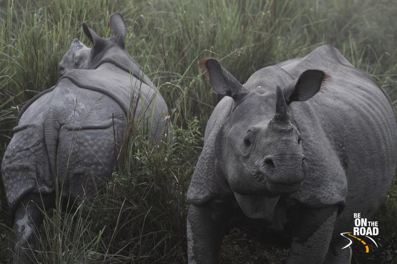 The endangered rhinoceros of Assam