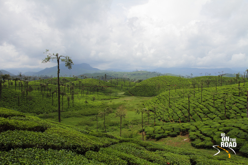 Serene View of the tea estates of Valparai