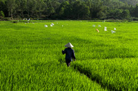 A walk in the paddy fields of My Son, Vietnam
