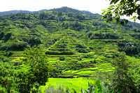 Famous rice terraces of Luzon island, Philippines