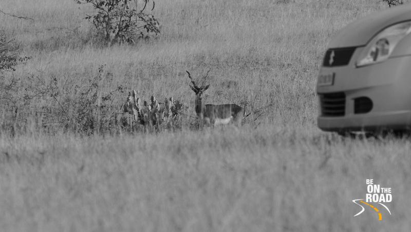 A Blackbuck Moment